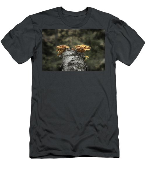 Mushrooms Atop Birch Men's T-Shirt (Athletic Fit)
