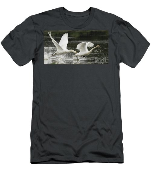 Mute Swan Intimidation Men's T-Shirt (Athletic Fit)