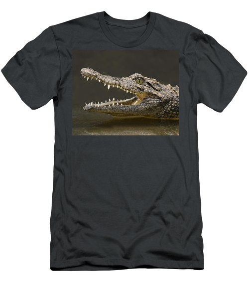 Nile Crocodile Men's T-Shirt (Athletic Fit)