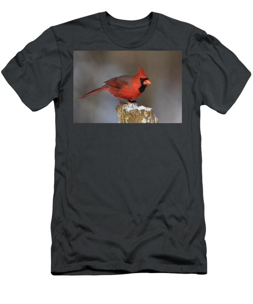 Men's T-Shirt (Slim Fit) featuring the photograph Northern Cardinal In Winter by Mircea Costina Photography
