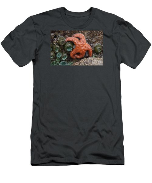 Orange Starfish And Anemonies Men's T-Shirt (Slim Fit) by Chuck Flewelling