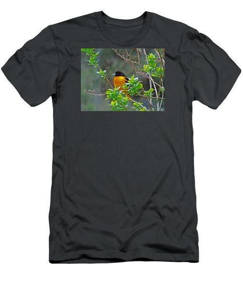 Oriole On The Lilac Men's T-Shirt (Slim Fit) by Larry Capra