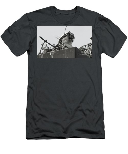 Osprey In Nest Men's T-Shirt (Athletic Fit)