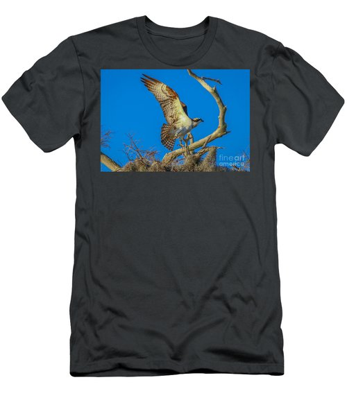 Osprey Landing On Branch Men's T-Shirt (Athletic Fit)