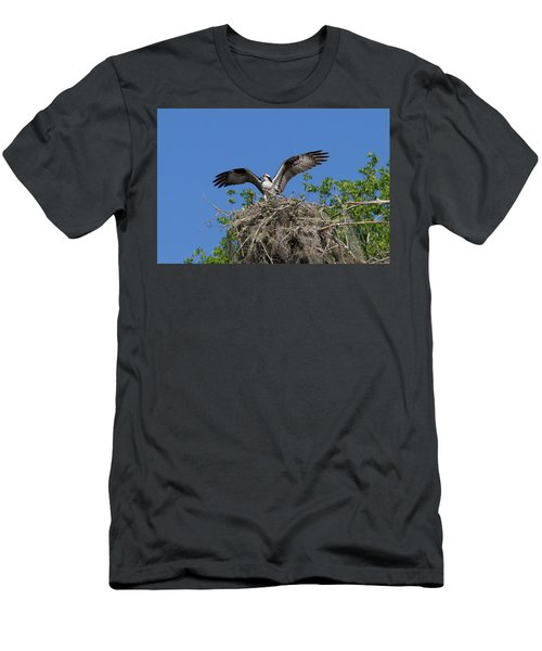 Osprey On Nest Wings Held High Men's T-Shirt (Athletic Fit)