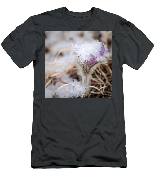Pasqueflower In The Snow Men's T-Shirt (Athletic Fit)