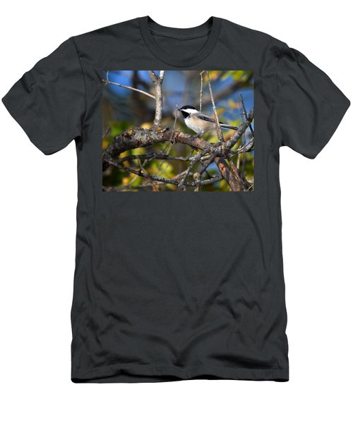 Perched Black-capped Chickadee Men's T-Shirt (Athletic Fit)