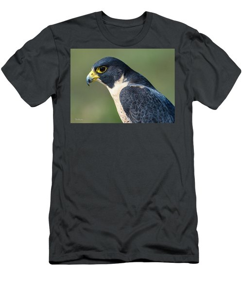 Peregrin Falcon Men's T-Shirt (Athletic Fit)