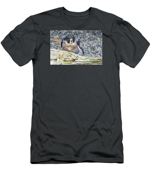 Peregrine Falcon 1 Men's T-Shirt (Slim Fit) by Harold Piskiel