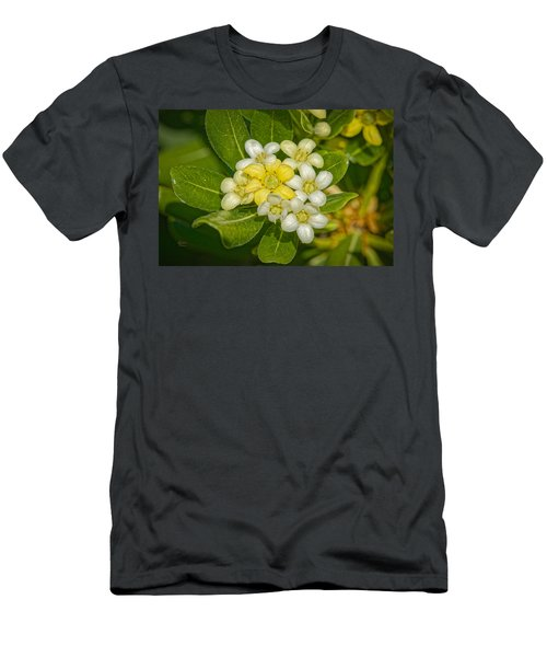 Pittosporum Flowers Men's T-Shirt (Athletic Fit)