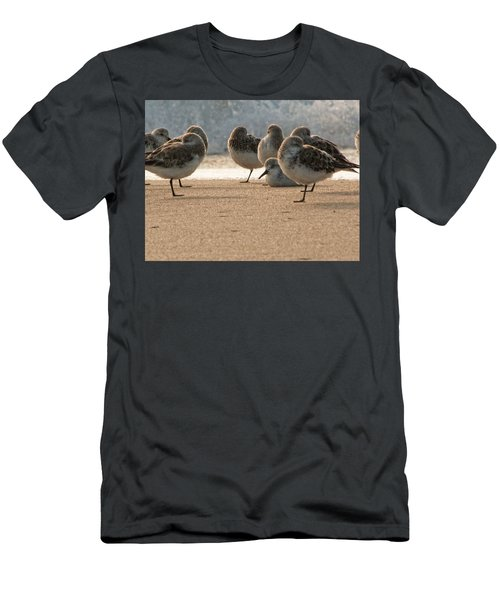 Plovers In The Morning Sunlight Men's T-Shirt (Athletic Fit)
