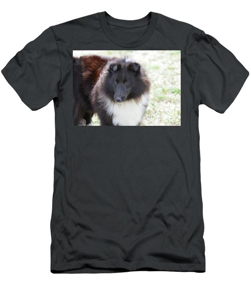 Pretty Black And White Sheltie Dog Men's T-Shirt (Athletic Fit)