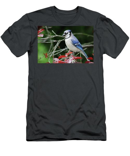 Pretty Blue Jay Men's T-Shirt (Athletic Fit)