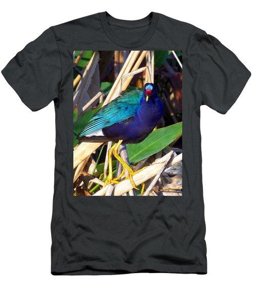 Purple Galinule 001 Men's T-Shirt (Slim Fit) by Chris Mercer