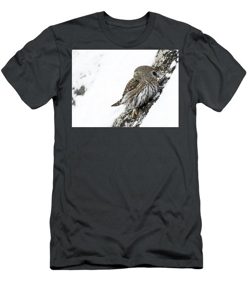 Pygmy Owl Men's T-Shirt (Athletic Fit)