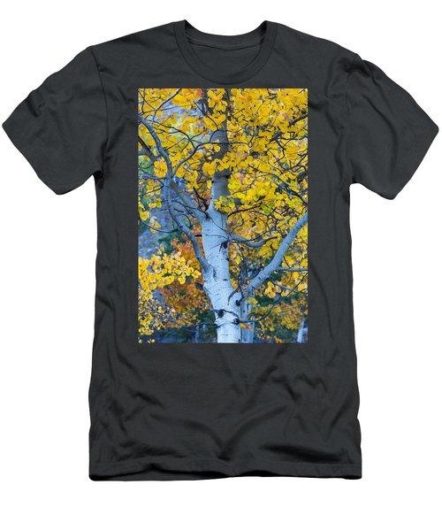 Quaking Aspen Men's T-Shirt (Athletic Fit)