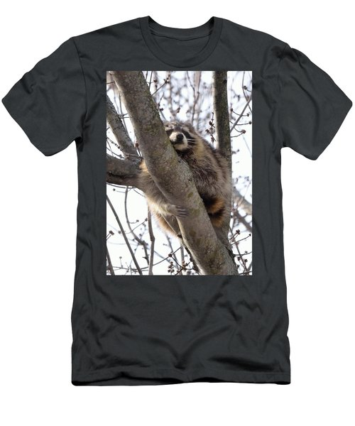 Afternoon Nap-raccoon Up A Tree  Men's T-Shirt (Athletic Fit)