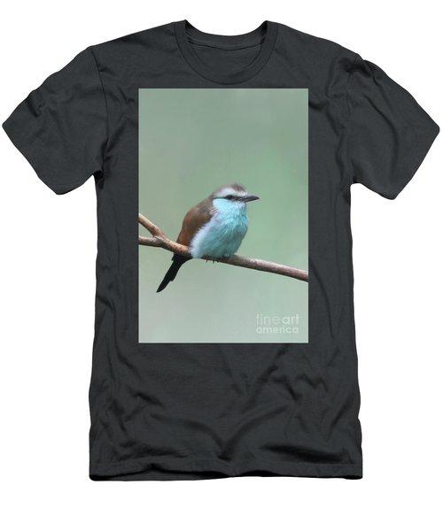 Racket-tailed Roller V2 Men's T-Shirt (Athletic Fit)