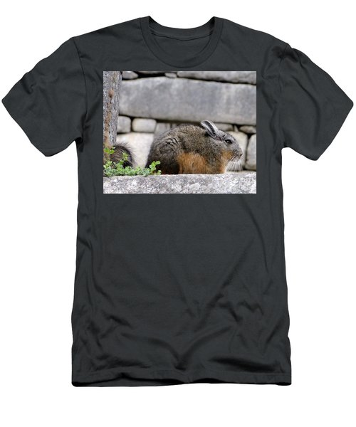 Rare Little Chincha Men's T-Shirt (Athletic Fit)