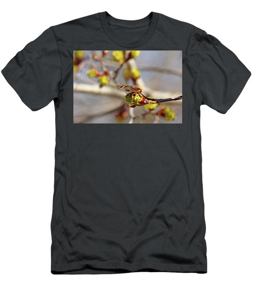 Red Admiral On Maple Bud Men's T-Shirt (Athletic Fit)