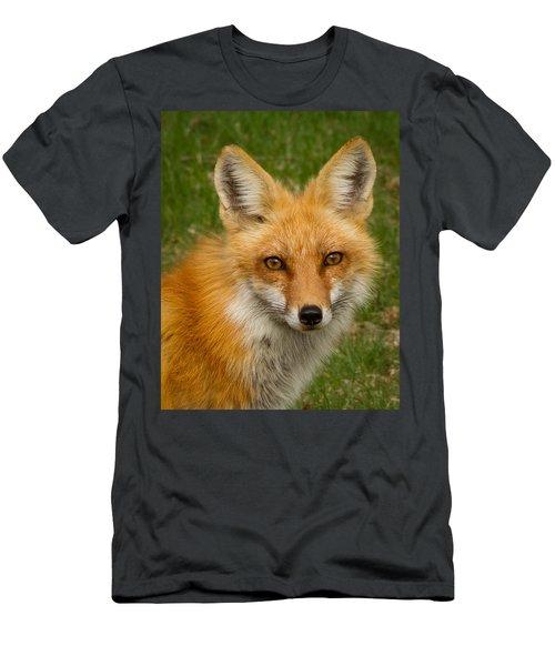 Red Fox Portrait Men's T-Shirt (Athletic Fit)