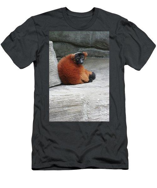 Red Ruffed Lemur Men's T-Shirt (Athletic Fit)