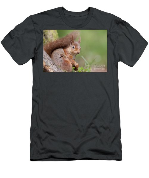 Red Squirrel - Scottish Highlands  #17 Men's T-Shirt (Athletic Fit)