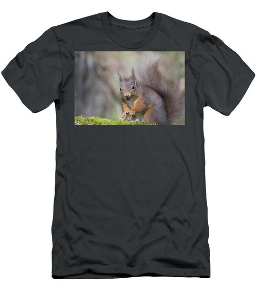 Red Squirrel - Scottish Highlands #26 Men's T-Shirt (Athletic Fit)