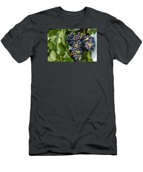 Red Wine Grapes On The Vine Men's T-Shirt (Slim Fit) by Teri Virbickis