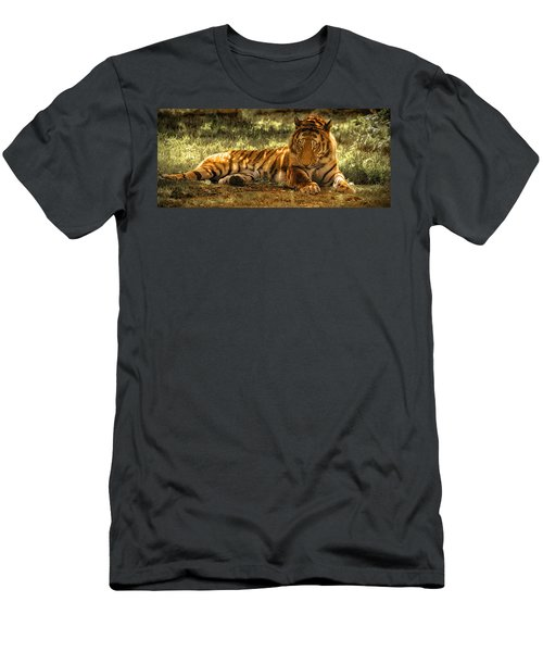 Resting Tiger Men's T-Shirt (Athletic Fit)