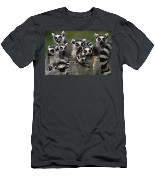 Men's T-Shirt (Athletic Fit) featuring the photograph Ring-tailed Lemur Lemur Catta Group by Gerry Ellis
