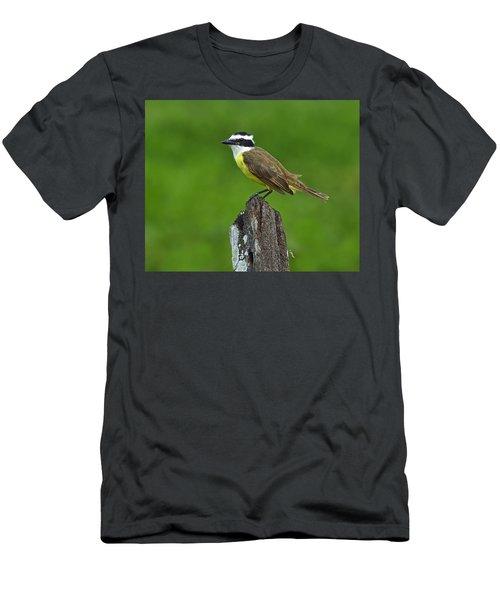 Roadside Kiskadee Men's T-Shirt (Athletic Fit)