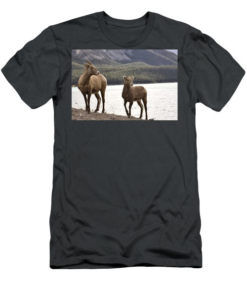 Rocky Mountain Sheep Men's T-Shirt (Athletic Fit)
