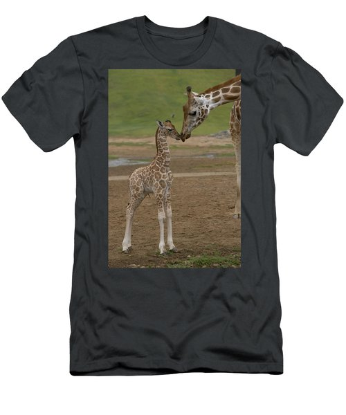 Men's T-Shirt (Athletic Fit) featuring the photograph Rothschild Giraffe Giraffa by San Diego Zoo