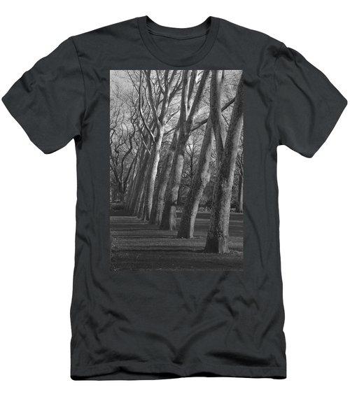 Row Trees Men's T-Shirt (Slim Fit) by Henri Irizarri