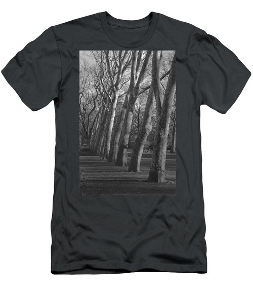 Row Trees Men's T-Shirt (Athletic Fit)