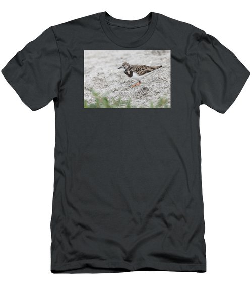 Ruddy Turnstone Foraging On The Beach Men's T-Shirt (Athletic Fit)