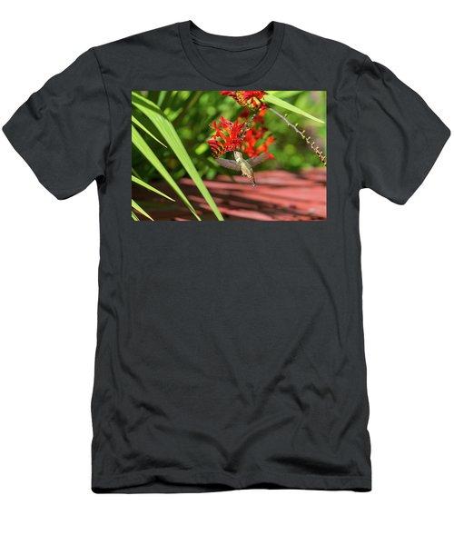 Rufous Hummingbird Feeding On Flower Nectar Men's T-Shirt (Athletic Fit)