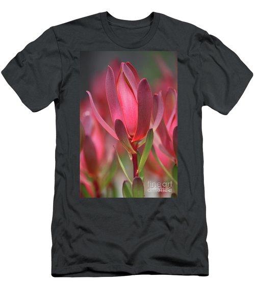 Safari Sunset 2 Men's T-Shirt (Athletic Fit)
