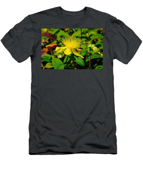 Saint John's Wort Blossom Men's T-Shirt (Athletic Fit)