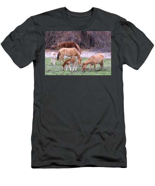 Salt River Wild Horses In Winter Men's T-Shirt (Athletic Fit)