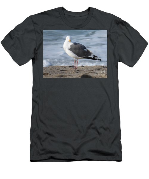 Santa Monica Seagull Men's T-Shirt (Athletic Fit)
