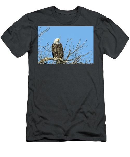 Screeching Eagle Men's T-Shirt (Slim Fit) by Brook Burling