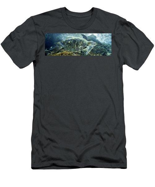 Sea Of Cortez Green Turtle Men's T-Shirt (Athletic Fit)