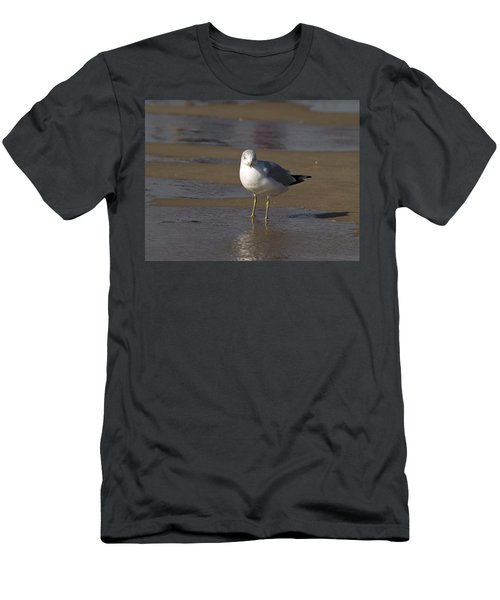 Seagull Standing Men's T-Shirt (Slim Fit) by Tara Lynn