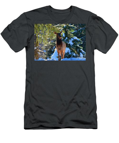 Searching For Food Men's T-Shirt (Athletic Fit)