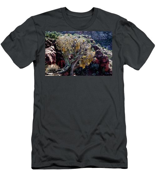 Sedona Tree #2 Men's T-Shirt (Athletic Fit)