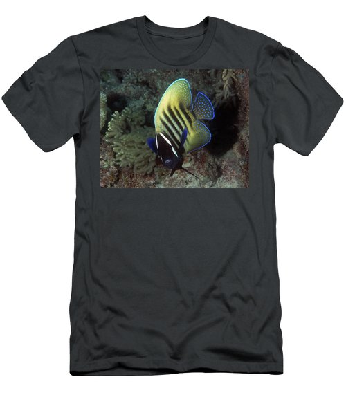 Six Banded Angelfish, Great Barrier Reef Men's T-Shirt (Athletic Fit)