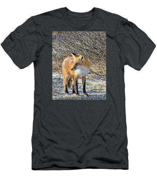 Sly Little Fox Men's T-Shirt (Slim Fit) by Sami Martin