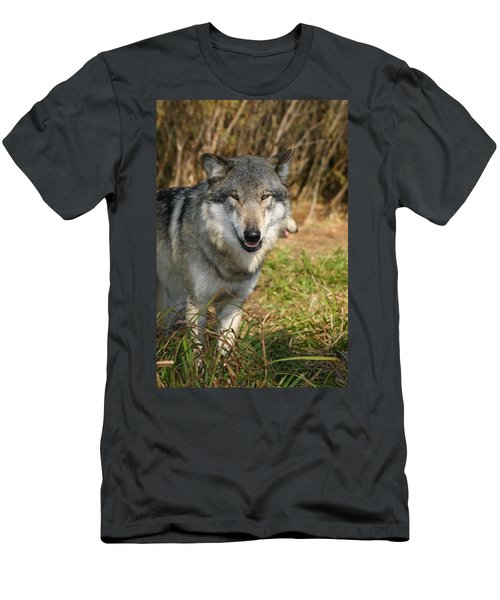 Smiling Wolf Men's T-Shirt (Athletic Fit)